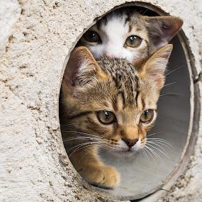 Afraid by Jürgen Mayer - Animals - Cats Kittens ( kitten, cat, afraid, katze, hiding, hidden, ängstlich, versteckt, kätzchen )
