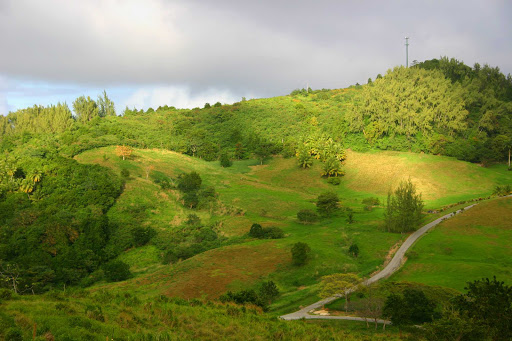 green-hills-Barbados - The green hills of Barbados.