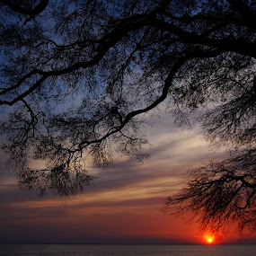 Potomac Sunset: Outstretched Branches by Deborah Powell - Landscapes Sunsets & Sunrises ( water, maryland shore, silhouette, cobb island, horizon, sun, tree, sunset, red sunset, southern maryland, purple sunset, maryland, outstretched branches, sun ball, branches, river,  )