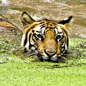 by Arkadeb Kar - Novices Only Wildlife (  )