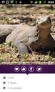 Komodonesia - screenshot thumbnail