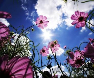 3D Flower - screenshot thumbnail