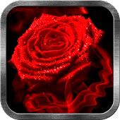Red Rose Fire Live Wallpaper