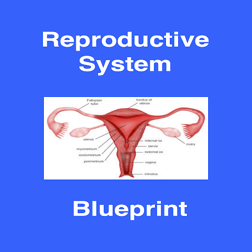 Reproductive Blueprint PANCE