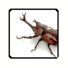 こんちゅう(昆虫)たっち icon