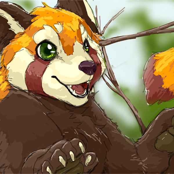 Red Panda » drawings » SketchPort