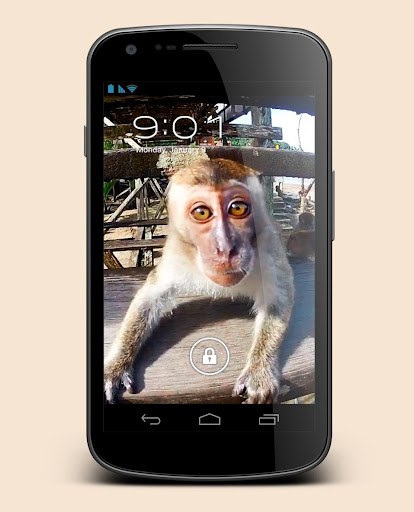 Monkey Sees You Live Wallpaper