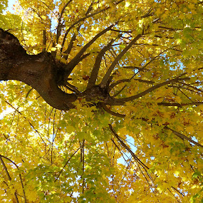 Fall by Charlene Cadman - Nature Up Close Trees & Bushes