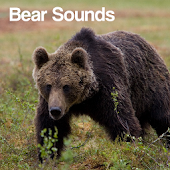 Bear Sounds