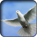 Pigeons Wallpapers icon