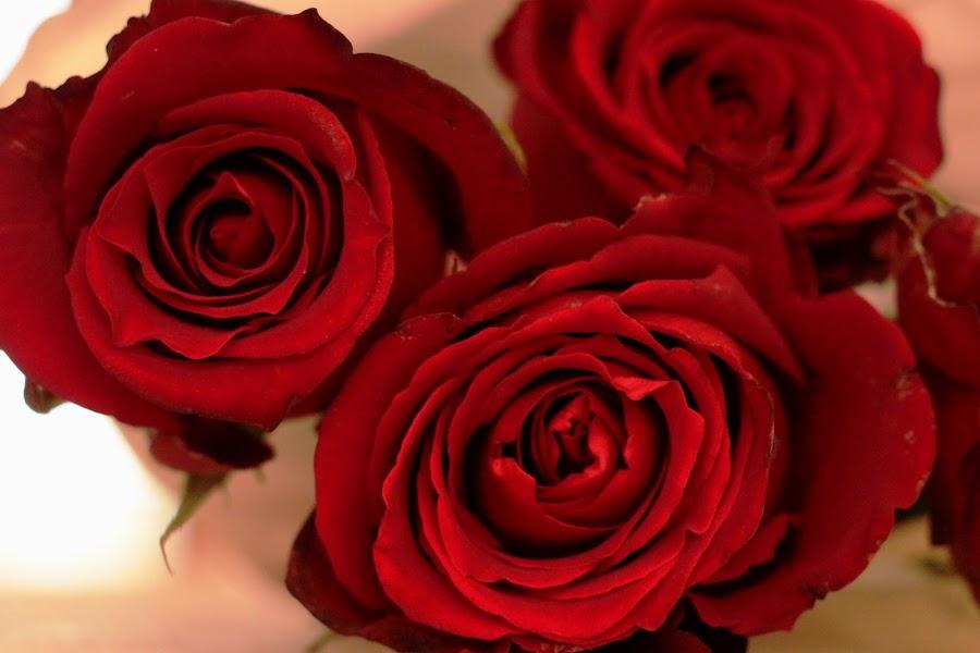 Love Lost by Jo-Ann de Smit - Flowers Flower Arangements (  )