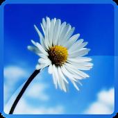 Blue Sky Flowers Wallpaper