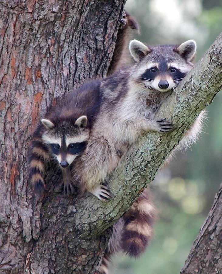 by Kathy Filipovich - Animals Other Mammals (  )
