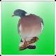 Professional Birds Calls v1.2