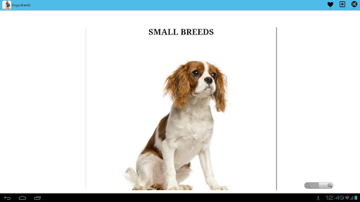 Dog Breeds First Time Owners