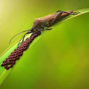 A Mother's Love by Vandie Ndie - Animals Insects & Spiders