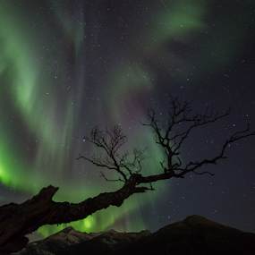 Green tree by Geir Hammer - Landscapes Starscapes ( mountain, tree, stars, snow, northern lights, aurora, skyscape, colours, norway )