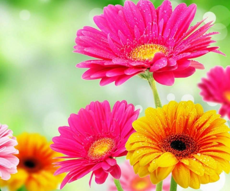 3d Flowers Image