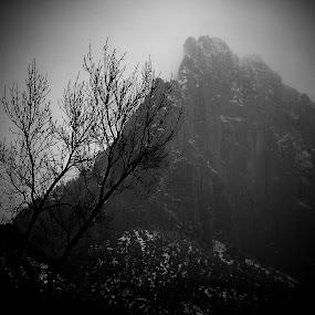 Morning Mist by Jackie Rave - Uncategorized All Uncategorized