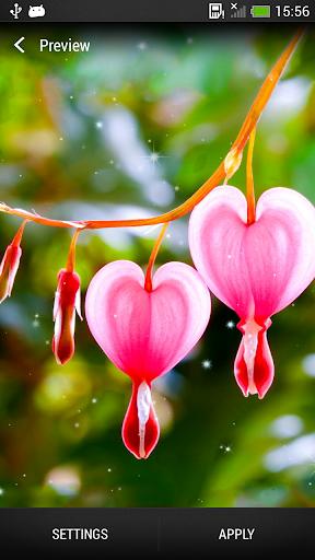 心和花 壁纸