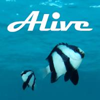 Ocean Alive Video Wallpapers 1.1.4