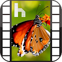 Butterfly Video Homescreen