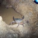 Cangrejo (crab)