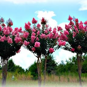 Triplets by Regina Watkins - Nature Up Close Trees & Bushes (  )