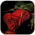 Crying Rose icon