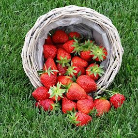 by Dubravka Bednaršek - Food & Drink Fruits & Vegetables ( , red, green )