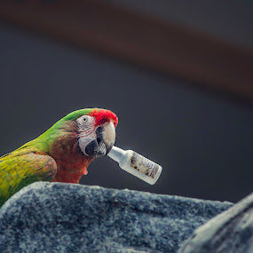 Perroquet Alcholique by Serge Thonon - Animals Birds (  )