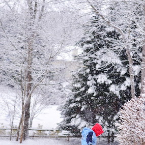 by Abigail Hardy - Babies & Children Children Candids ( winter, red, snow, toddler, exploring )