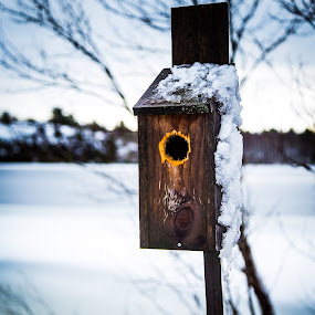 Anybody Home? by Jennifer Bacon - Artistic Objects Other Objects ( bird, water, winter, cold, bird house, snow, feeder )