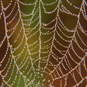 by Shrikrishna Bhat - Nature Up Close Webs (  )