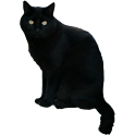Black Cat Sticker icon