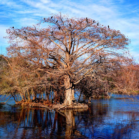 Tree of Life, by Scott Walker - Landscapes Waterscapes ( tree, color, texas, lake, birds )