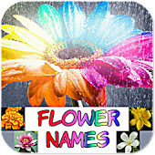 Flower Names, Colors, Features