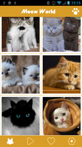 Meow World - 喵喵貓