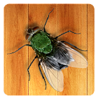 Kill The Fly icon