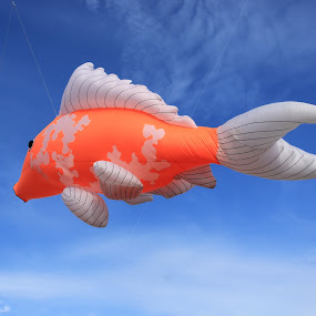 Flying fish..... by Esyam Din - Artistic Objects Toys