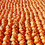 Pumpkin rows by Tony Moore - Abstract Patterns ( pattern, designs, pumpkin, pumpkins, symmetric, row, rows,  )