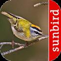 Vogel Id Schweiz - Gartenvögel icon
