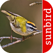Vogel Id Schweiz - Gartenvögel