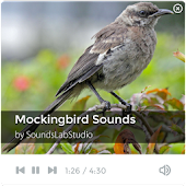 Mockingbird Sounds