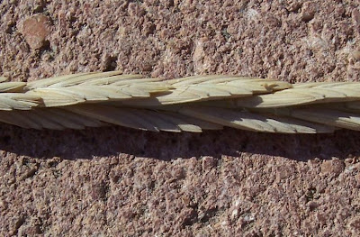 Agropyron pungens, Gramigna litoranea