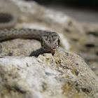 Water Snake / Cobra de Agua