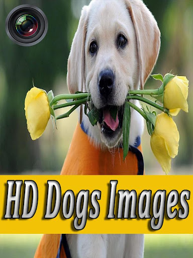 玩個人化App|Dogs Wallpapers Galaxy s6免費|APP試玩