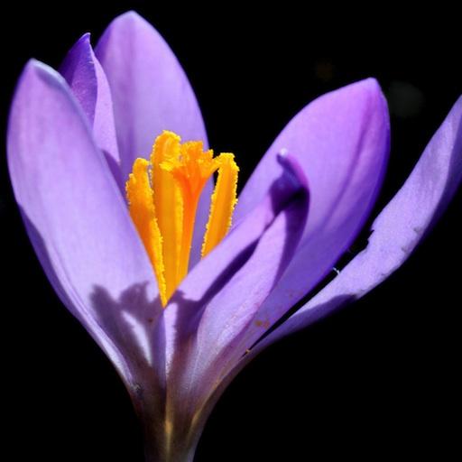Botanikus Botanische Datenbank LOGO-APP點子