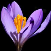 Botanikus Botanische Datenbank