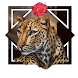 Handsome Leopard Live Wallpape